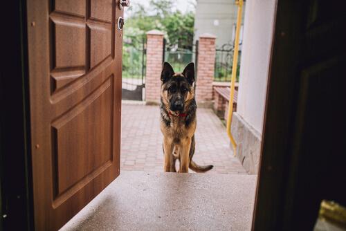 Misafirleri Rahatsız Eden Evcil Hayvanları Terbiye İçin 7 Öneri
