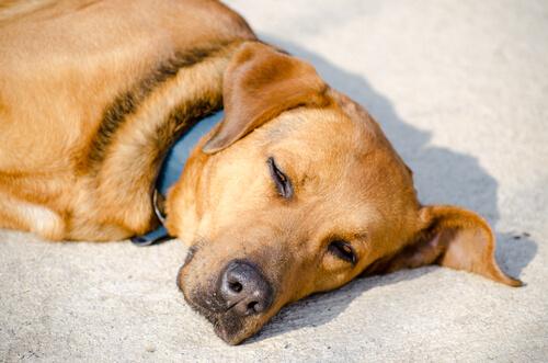 Köpekler Neden Güneşlenmeyi Sever?