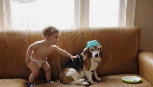 Bir Çocuğun Ölen Köpeğine Yazdığı Mektuba Aldığı Cevap