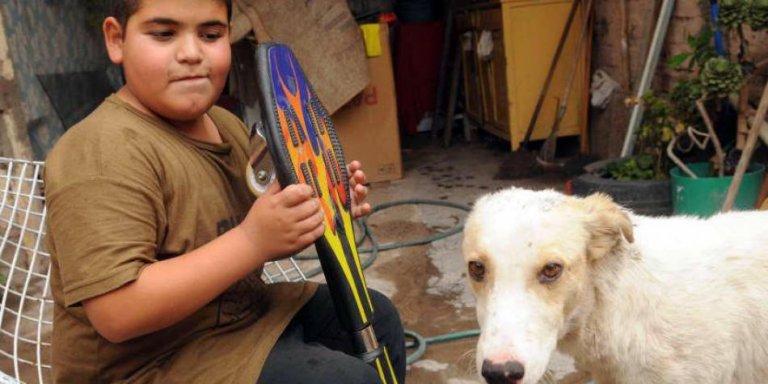 sokak köpeği ve çocuk