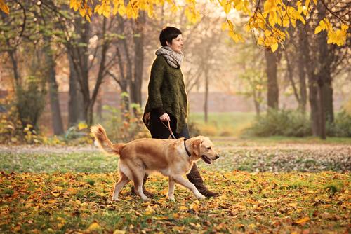 sonbaharda köpek ve sahibi