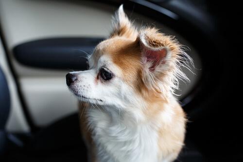 Köpeği Kurtarmak İçin BMW'nin Camını Kıran Adam