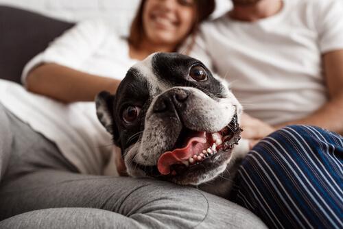 Neden Köpeklere İnsanmış Gibi Davranmak İstismar Sayılır