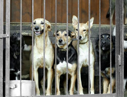 Güney Kore En Büyük Köpek Eti Pazarını Kapatıyor