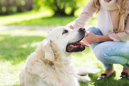 sarışın kadın ve köpek
