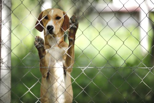 çitlerin arkasında duran köpek