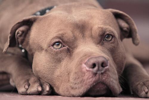 hüzünlü köpek