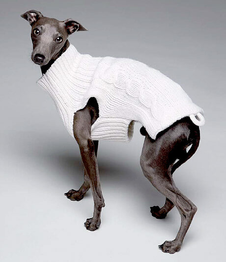 kazak giydirilmiş köpek
