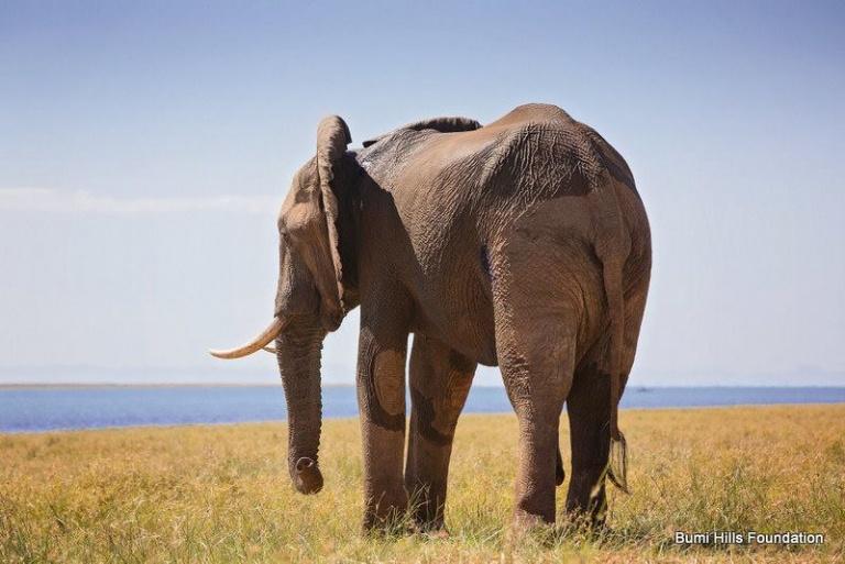 büyük fil