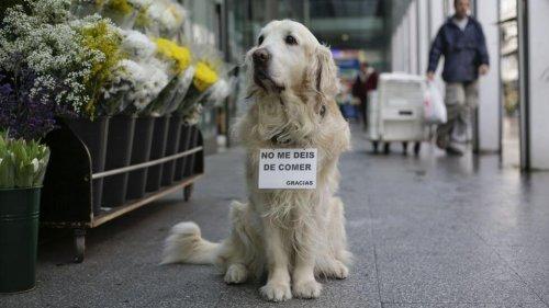 Lugo Meydanı'nın Ünlü Köpeği Ney'in Hikayesi