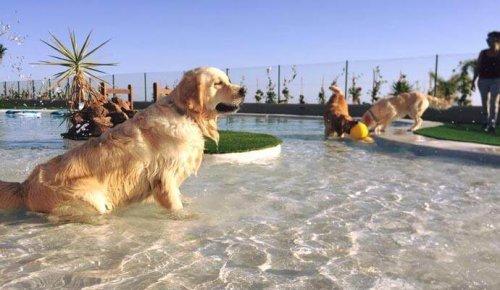 Tenerif'de Avrupa'nın Lüks Köpek Oteli Açılıyor