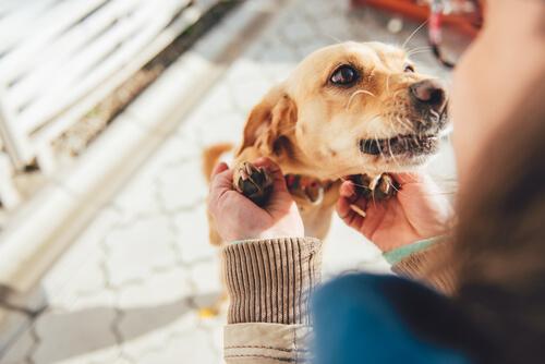 Köpeğinizin Size Söylemek İstediği 10 Şey