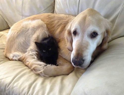 Yeni Bir Arkadaş Edinen Köpek Fosberg