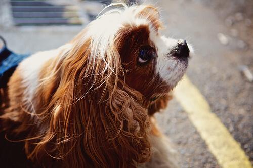 Köpeğinizle Konuşmak Sizi Daha Akıllı Yapar
