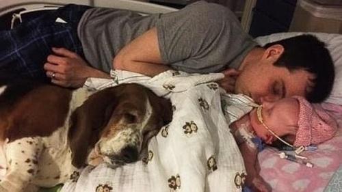 Sadık Köpek Basset Hound ve Minik Sahibi