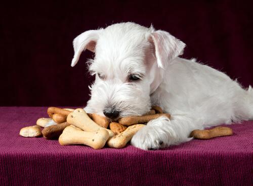 kraker yiyen köpek