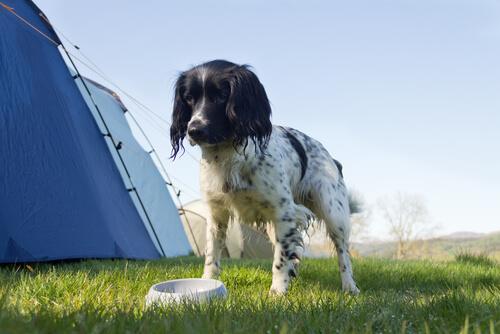 Köpeğinizi zehirleyebilecek 10 şaşırtıcı şey