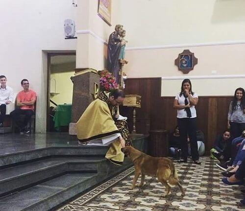 Hayvanlara Yönelik Muamele Üzerine Bir Ders: Kilisedeki Sokak Köpeği