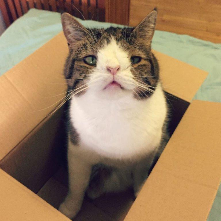 down sendromlu kedi