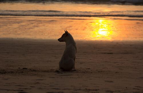 Evcil Hayvanınızı Kaybetmek Ailenizden Birini Kaybetmek Kadar Acı Verir