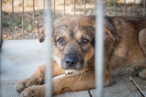 Quito-Ekvator'da Hayvan İstismarı Cezalandırılıyor