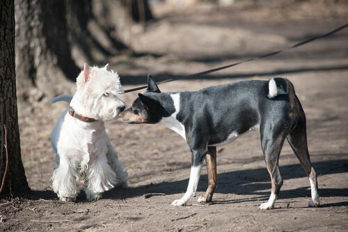 Köpekleri Ürküten 4 Şey