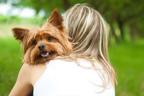 Köpeğinizin Sizi Deli Gibi Sevdiğini Nasıl Anlarsınız?