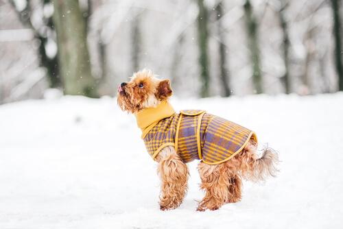Bu Kış Köpeğinizi Sıcak Tutacak 5 İpucu