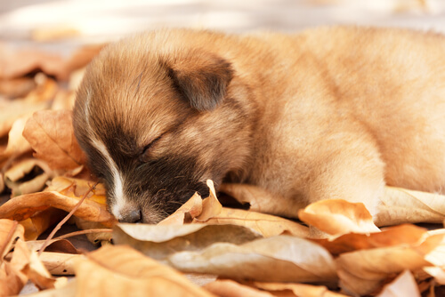 Uyku Pozisyonuna Göre Köpeğinizin Kişiliği