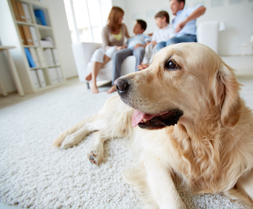 köpek ve aile bireyleri