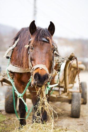 bağlanmış at
