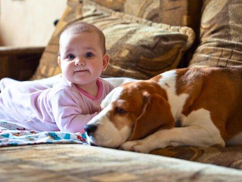 basset hound ve bebek