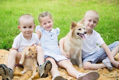 kedi köpek ve çocuklar