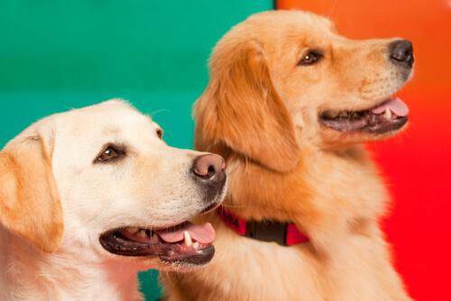 kardeş köpekler
