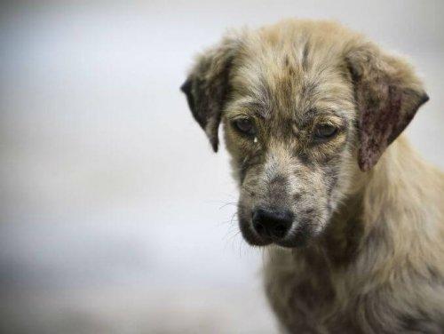 GoPro ile Bir Sokak Köpeğinin Hayatı