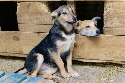 Sokak Köpekleri İçin Kulübe Projeleri