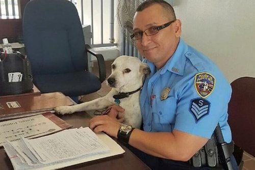 Sokak Köpeği Gorgi'nin Polis Köpeği Olma Yolculuğu
