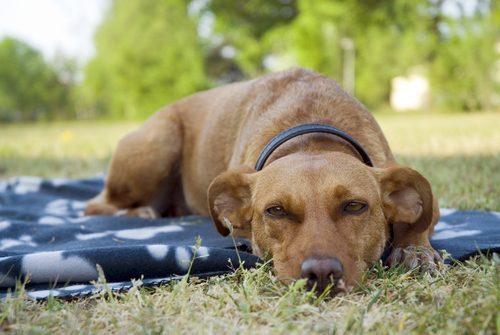 çimlerde dinlenen köpek