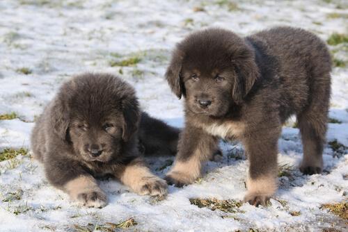 Dünyadaki En Pahalı Köpekler