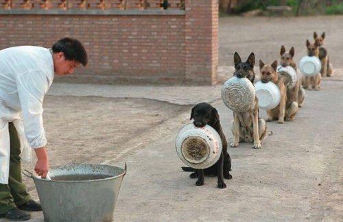 Yemek İçin Sıra Bekleyen İradesi Güçlü 16 Köpek