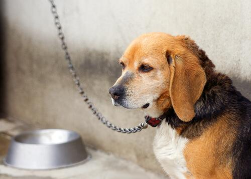 Zincirlenmiş Köpek ve Onu Kurtaran Komşular