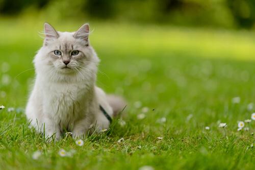 kedi bahçede