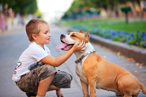 köpeği seven çocuk