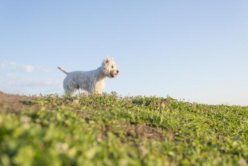 Hayvanınızı Kaybetmek: Sen Gittiğinden Beri