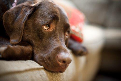 Sahibini Özleyen Köpek