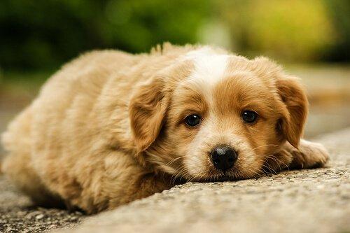 İstismar Edilmiş Köpekler ve Acıma Duygusu