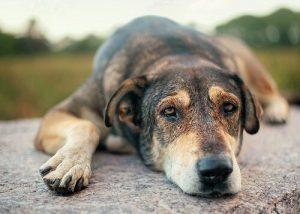 istismar edilmiş köpekler