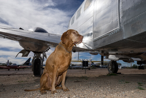 Uçakların Kargo Bölümünde Köpekleri Bekleyen Tehlikeler