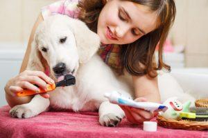 köpeklerde ağız bakımı