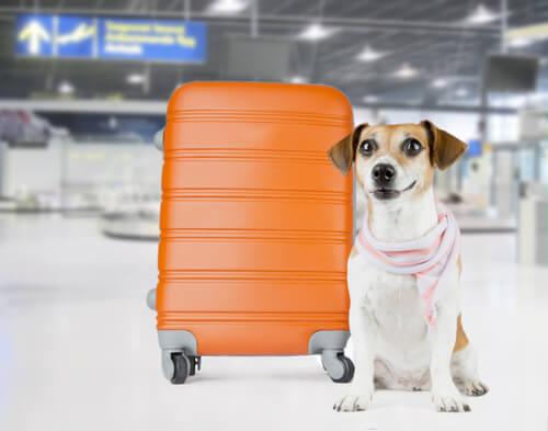uçakların kargo bölümünde köpek taşınması